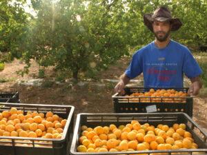 סמינר חקלאות אורגנית