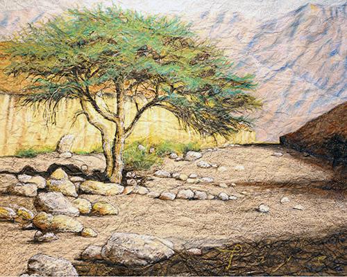 עץ-שיטה-משמאל1